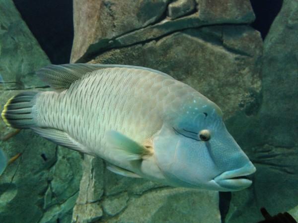 fishy friend